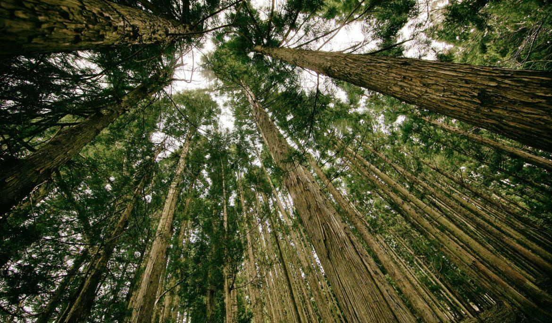 Le Groupe Duval s'engage à planter 100 000 arbres en France et au Togo.